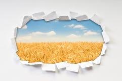 Campo de trigo através do furo Imagens de Stock Royalty Free