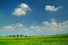 Campo de trigo bajo un cielo azul Foto de archivo libre de regalías