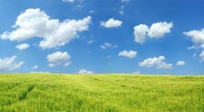 Campo de trigo bonito Imagens de Stock