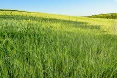 Campo de trigo cerca de Roma Imagen de archivo