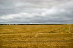 Campo de trigo, a colheita colhida Fotografia de Stock
