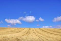 Campo de trigo colhido Fotos de Stock