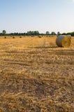 Campo de trigo colhido Imagens de Stock
