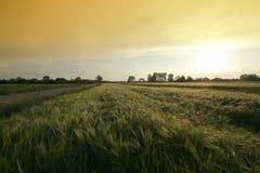 Campo de trigo com estrada Fotografia de Stock Royalty Free