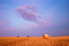 Campo de trigo con el cielo imagenes de archivo