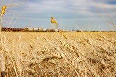 Campo de trigo con el tren que pasa el elevador de grano imágenes de archivo libres de regalías