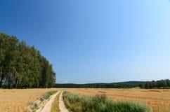 Campo de trigo con los árboles en fondo y camino Fotografía de archivo