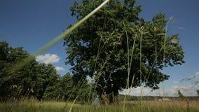 Campo de trigo con un árbol encendido y el cielo azul almacen de video