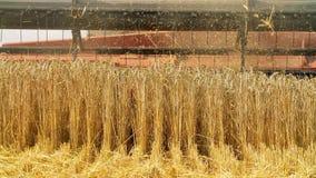 Campo de trigo con una máquina segadora almacen de video