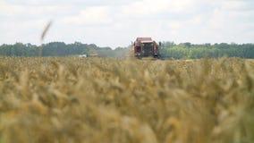 Campo de trigo con una máquina segadora metrajes