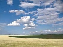 Campo de trigo contra Fotografia de Stock