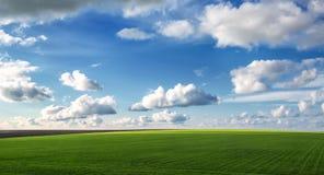 Campo de trigo contra o céu azul com nuvens brancas Fotografia de Stock