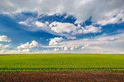 Campo de trigo contra o céu azul com nuvens brancas Imagens de Stock