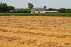 Campo de trigo cosechado Fotografía de archivo