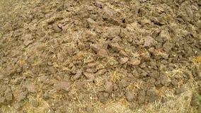 Campo de trigo, cosechado y arado con los restos de la paja almacen de metraje de vídeo