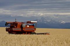 Campo de trigo de Idaho Foto de archivo libre de regalías