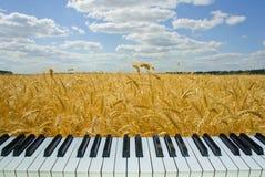 Campo de trigo de la música, llaves del piano con la naturaleza Foto de archivo libre de regalías