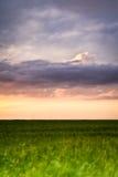 Campo de trigo de la tarde Fotos de archivo libres de regalías