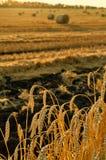 Campo de trigo de oro Fotos de archivo