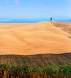 Campo de trigo de Tuscan   Foto de Stock Royalty Free