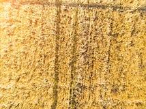 Campo de trigo del alto Foto de archivo libre de regalías