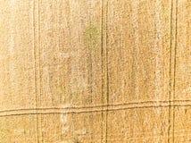 Campo de trigo del alto Fotografía de archivo libre de regalías