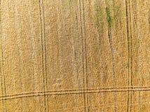 Campo de trigo del alto Fotos de archivo libres de regalías