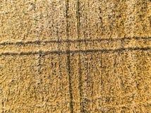 Campo de trigo del alto Foto de archivo