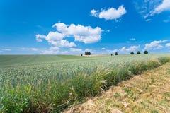 Campo de trigo del país Imágenes de archivo libres de regalías
