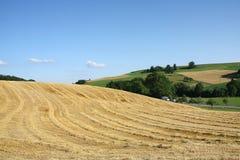 Campo de trigo después de la cosecha Imágenes de archivo libres de regalías