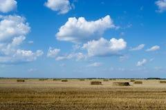 Campo de trigo después de la cosecha Fotos de archivo libres de regalías