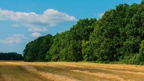 Campo de trigo después de la cosecha Fotografía de archivo libre de regalías