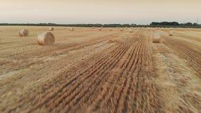Campo de trigo después de una cosecha almacen de video