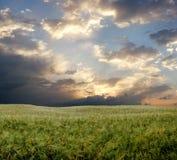 Campo de trigo durante día tempestuoso Imagen de archivo libre de regalías