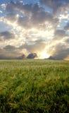 Campo de trigo durante o dia tormentoso imagens de stock royalty free