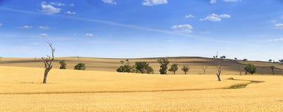 Campo de trigo em Novo Gales do Sul, Austrália Imagem de Stock