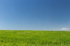 Campo de trigo em um fundo do céu azul Fotografia de Stock Royalty Free