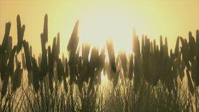 Campo de trigo en el amanecer metrajes