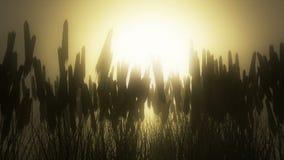 Campo de trigo en el amanecer almacen de video