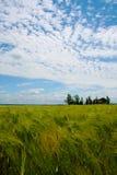 Campo de trigo en el La Loire Valley Foto de archivo
