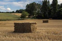 Campo de trigo en el valle del Loira Fotos de archivo