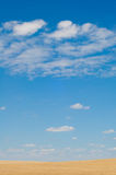 Campo de trigo en fondo del cielo azul con las nubes imagenes de archivo