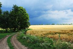 Campo de trigo en la lluvia Foto de archivo libre de regalías