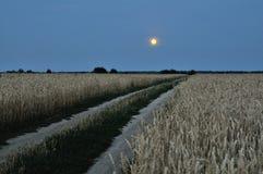 Campo de trigo en la noche Fotos de archivo libres de regalías