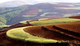 Campo de trigo en la pista roja Fotografía de archivo libre de regalías