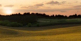 Campo de trigo en la puesta del sol Foto de archivo libre de regalías
