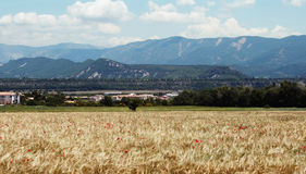 Campo de trigo en las montañas de Francia Fotografía de archivo