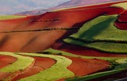 Campo de trigo en pista roja Fotografía de archivo libre de regalías