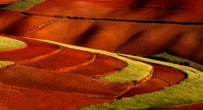 Campo de trigo en pista roja Fotos de archivo libres de regalías