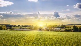 Campo de trigo en puesta del sol central Fotos de archivo libres de regalías